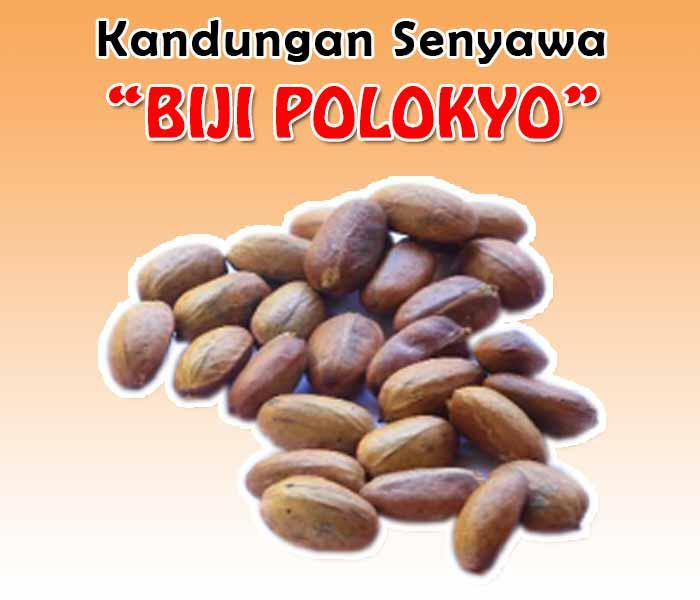 Biji Polokyo Murah
